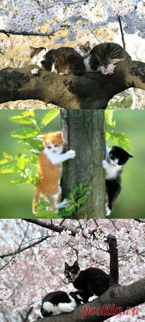 Смотрите скоро на всех деревьях страны )