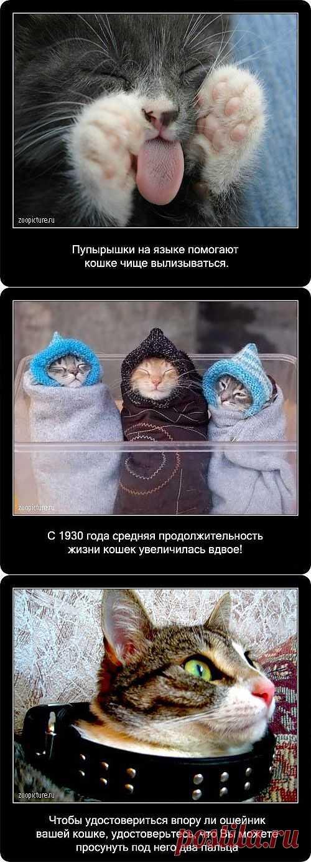 Современные кошки произошли от миацидов - маленьких животных, жывущих на деревьях. Еще много интересных фактов о кошках в картинках.