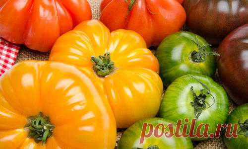 Сорта томатов. Необычные томаты: зеленые, оранжевые, желтые