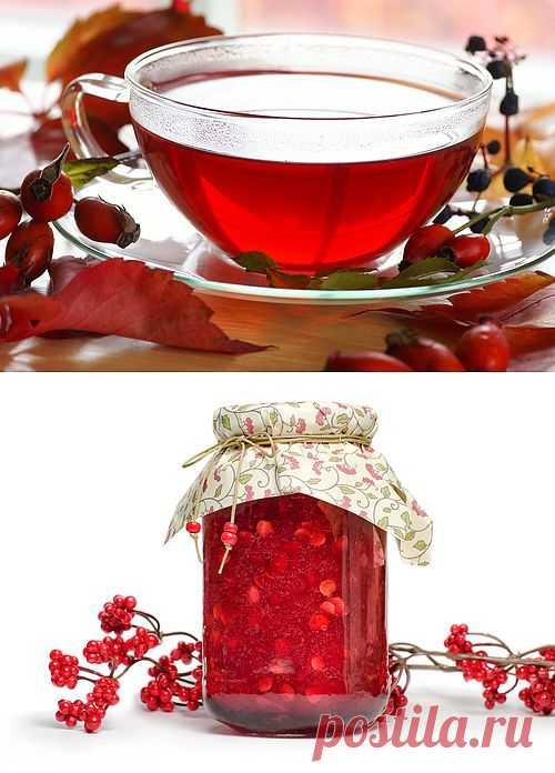 Осенние ягоды – кладовая витаминов | Первая помощь
