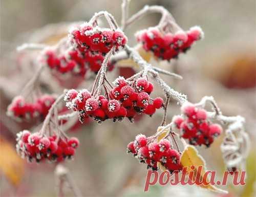 Работы в саду и огороде в декабре на Sadogolik.ru
