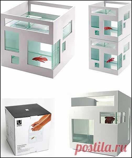 http://aquariumistika.mirtesen.ru/blog/43563153389