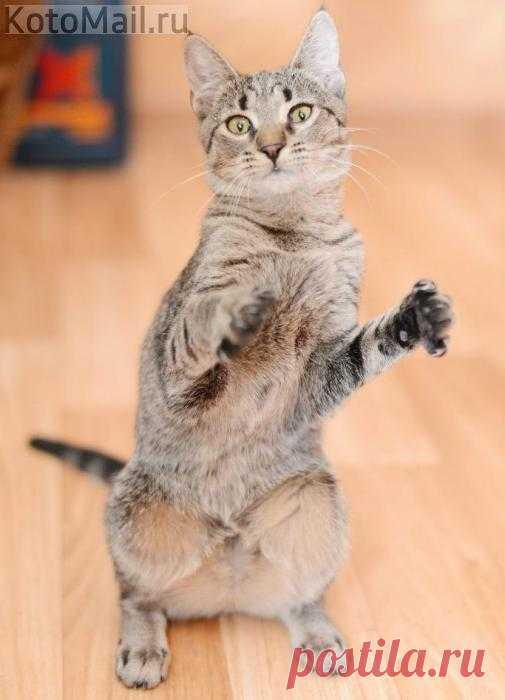 Когда так хорошо, что хочется танцевать!