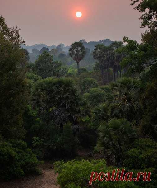 Закат в джунглях Камбоджи. Фото Дарьи Уткиной (nat-geo.ru/community/user/28009/). Спокойной ночи.