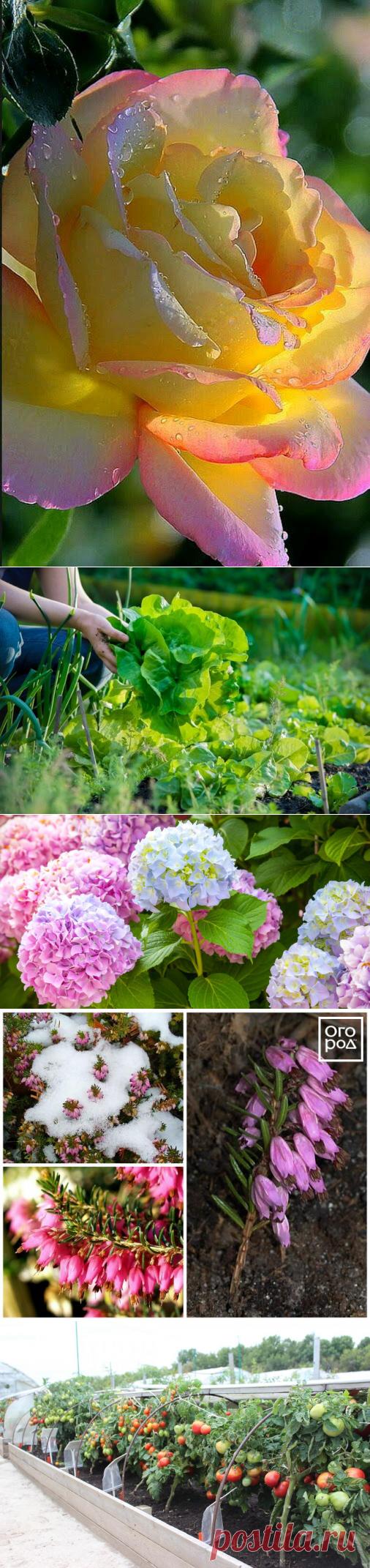 Сад и огород | Фотографии и советы опытных дачников на Постиле
