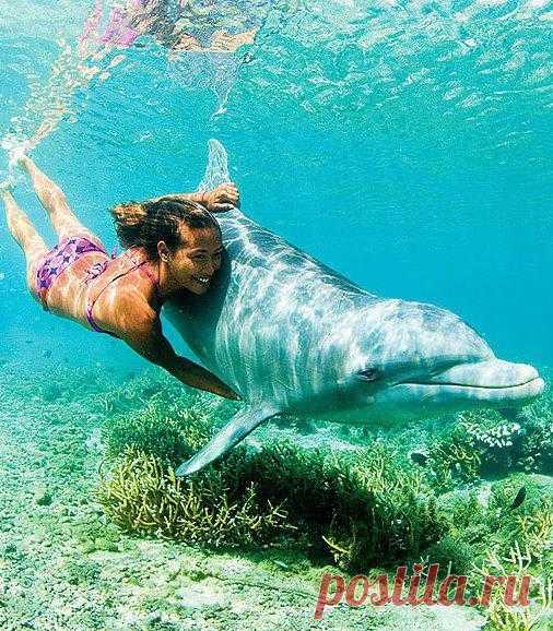 Дельфины. Лучшие друзья человеку на море
