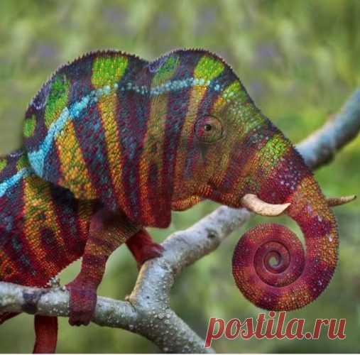 Фотошоп породил новых животных (15 фото)