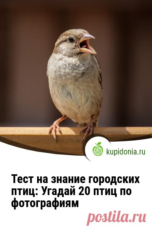 Тест на знание городских птиц: Угадай 20 птиц по фотографиям. Интересный тест о городских птицах. Сможете ли вы узнать каждую из них по фотографии