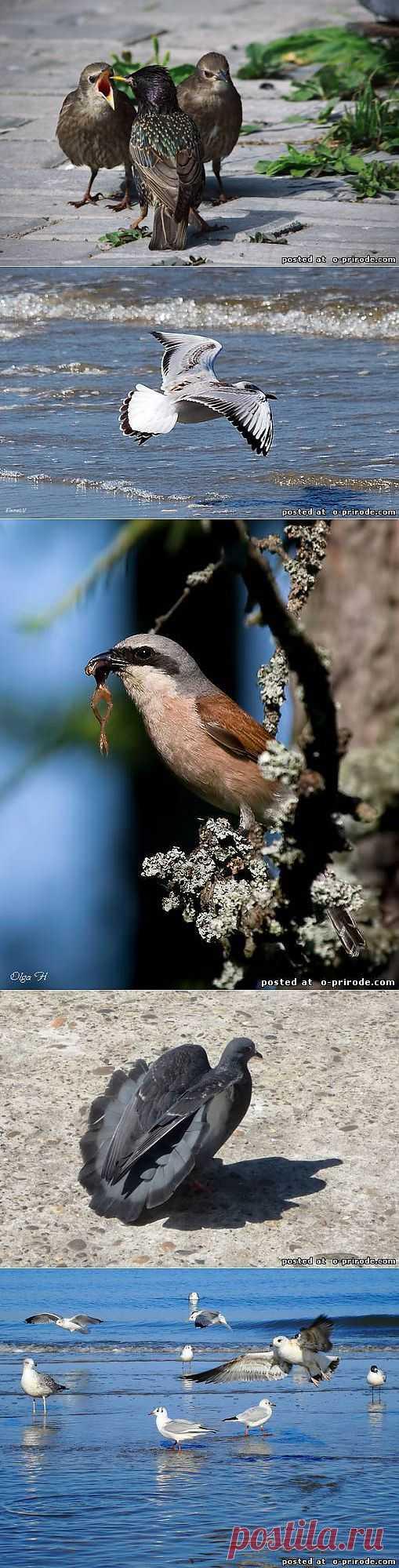Итоги конкурса Крылатая природа - Фото мир природы