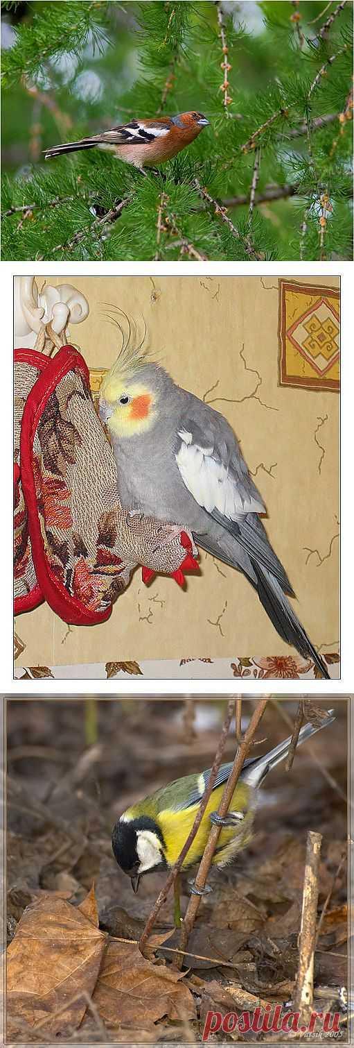 ���� ����, �������� ���������� ����, �������, ������������ ����� ���� красивые птички