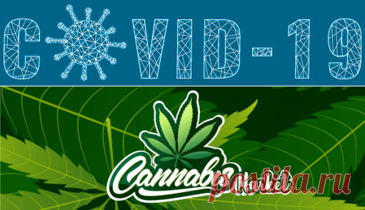 Cannabis Market Size, Research   Marijuana Industry Growth 2026