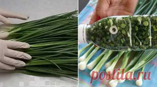 Как правильно заготовить зелень на зиму, чтобы она сохраняла свои вкусовые качества.