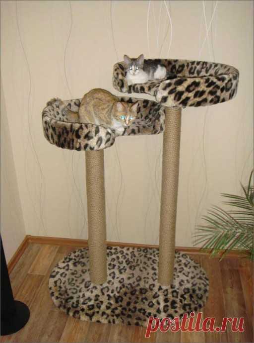 Когтеточка для кошек и лежак: два в одном