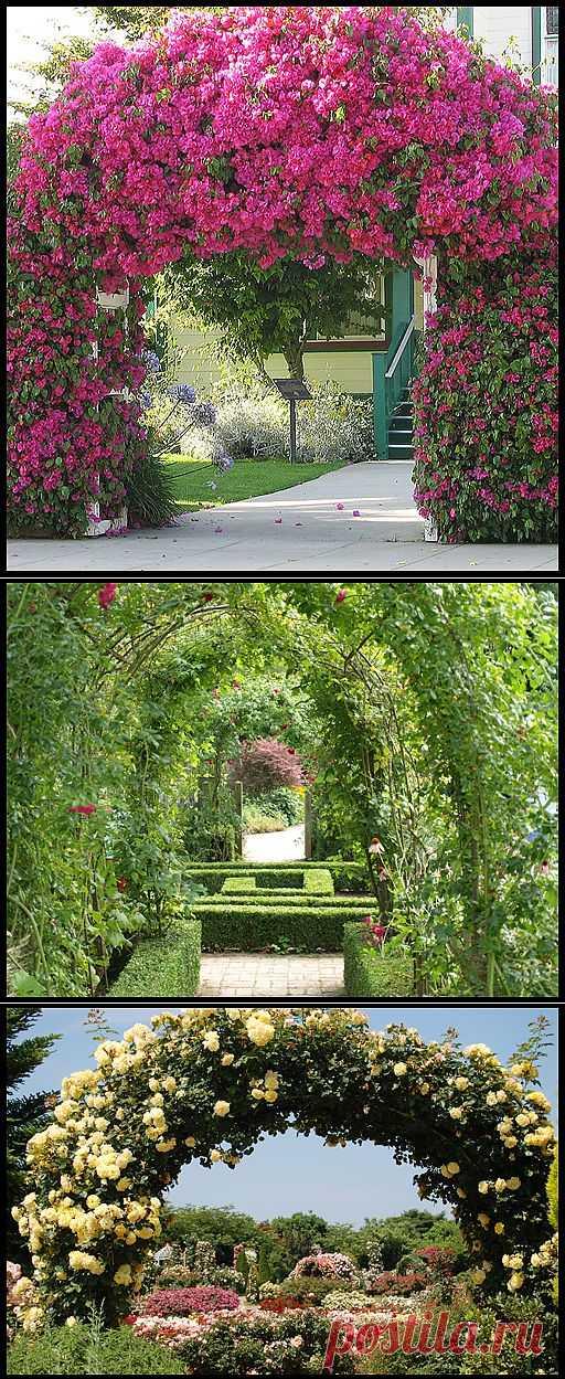 Садовые арки своими руками
