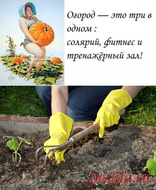 прополка огорода смешные картинки