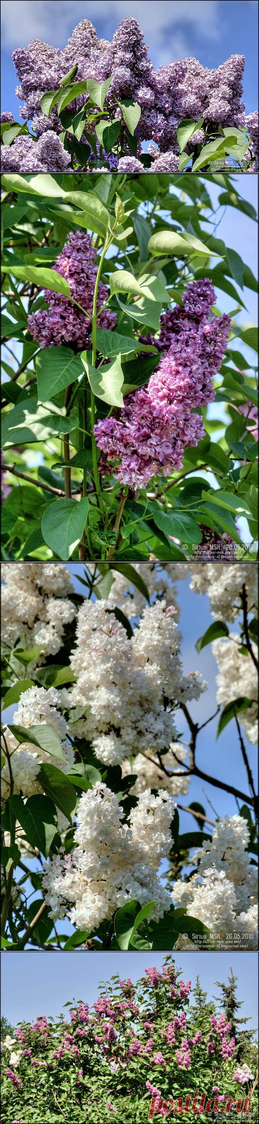 [HDR] 2010-05-20, ч. 3 | Сиреневый сад (восточная часть).: mskparksphoto