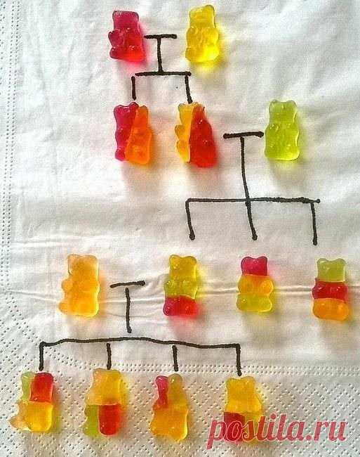 La genética de los ositos. Como esto así....