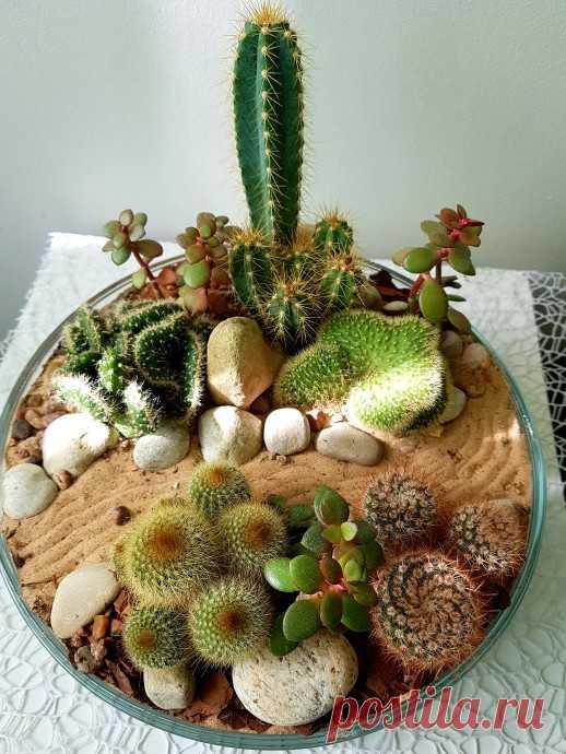 Mini garden - мини-сад