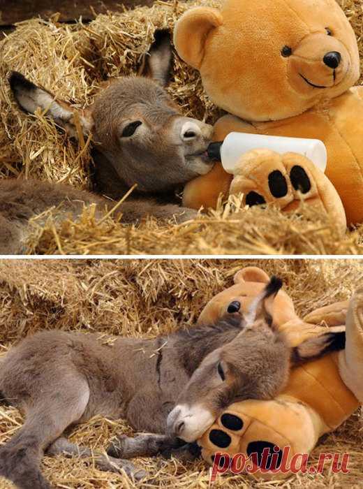 25 фото маленьких забавных осликов, которые делают этот мир немного добрее