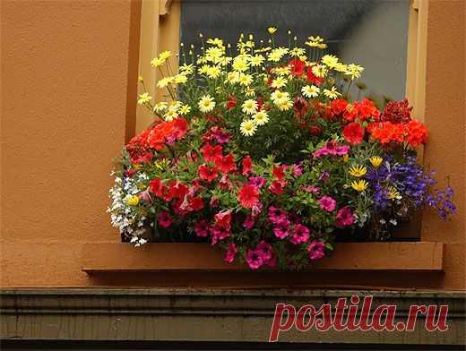 Не все комнатные растения одинаково полезны Комнатные растения делают дом по-настоящему уютным. Однако при их выборе следует быть внимательными, ведь некоторые из них могут...
