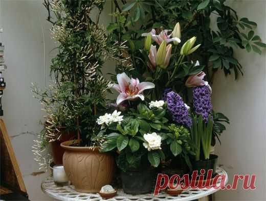 Нюансы домашнего цветоводства. Какие растения выбрать для кухни и спальни Домашние растения живут, наверное, в каждом доме. А знаете ли вы, что  для каждой комнаты надо выбирать вполне определенные, чтобы они...