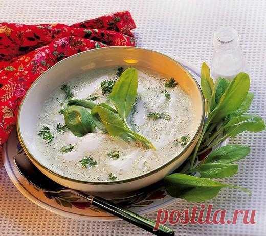 Щавелевый суп  Ингредиенты Курица 2-3 картофелины среднего размера пучок щавеля 1 морковка 1 луковица 1 сладкий перец Укроп, петрушка Соль, перец Сметана Растительное масло