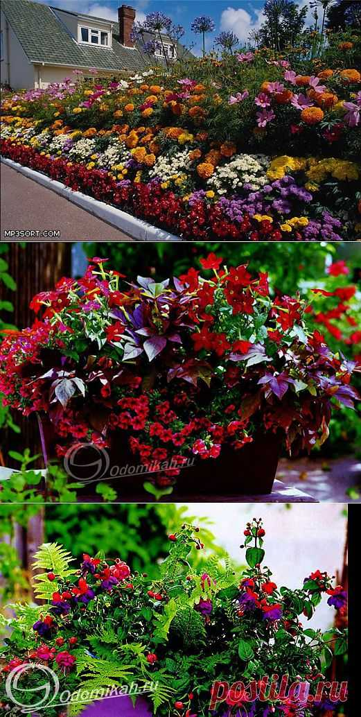 Цветочные композиции для украшения веранд, террас и балконов.