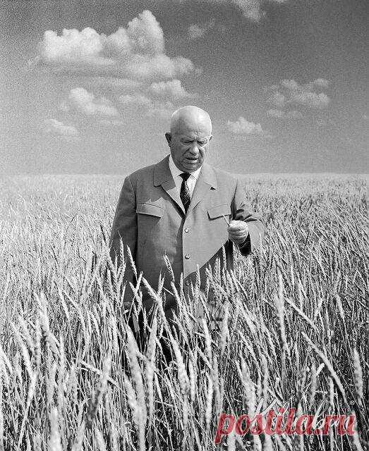 Хрущёв на освоенной целине, Казахстан, 1964 год.