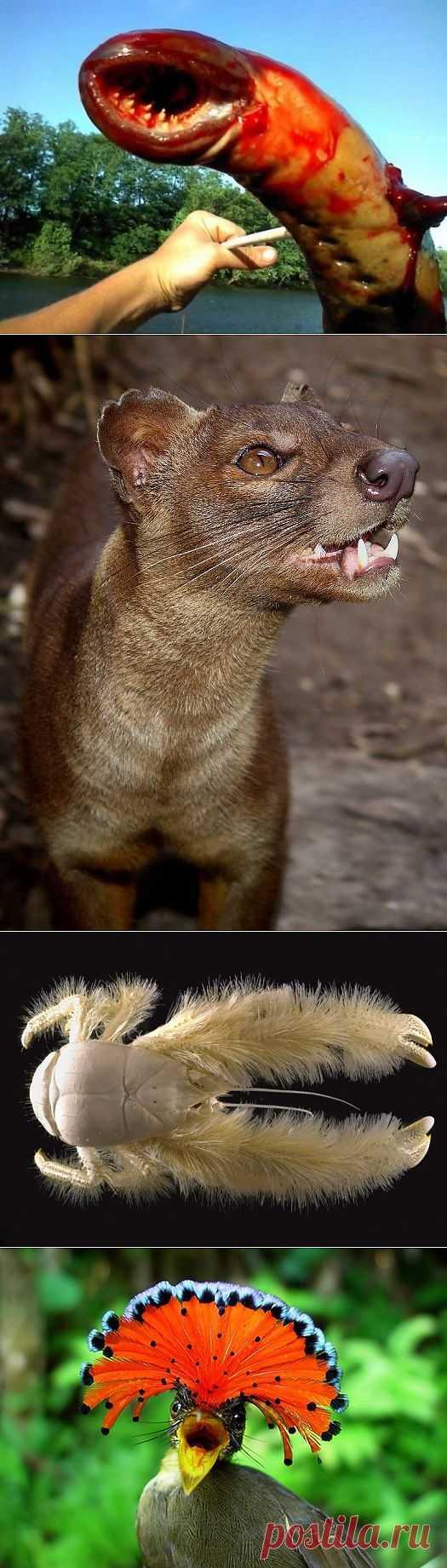 Редкие существа, о которых мало что известно (30 фото) - ВШоке.инфо - шокирующие новости, факты, видео и многое другое!