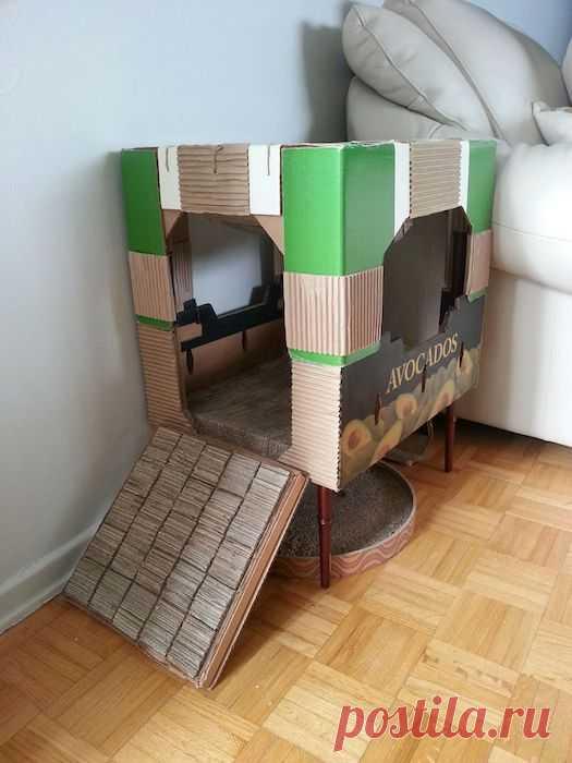 Верный способ раз и навсегда отучить кота портить мебель с помощью вещи, которая есть дома у каждого