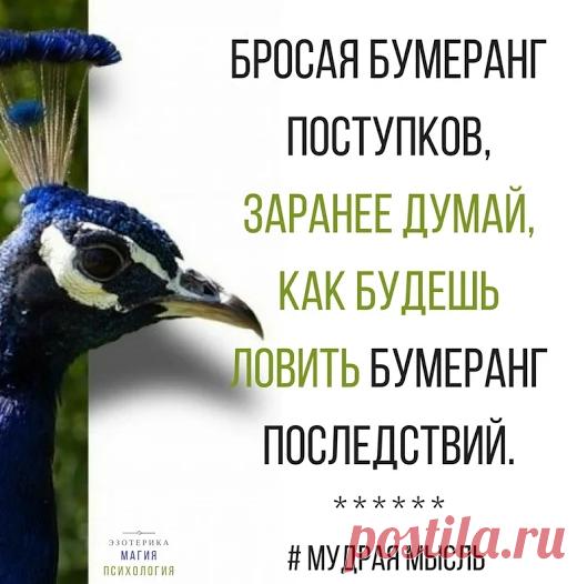 Елена Сергиенко - Google+