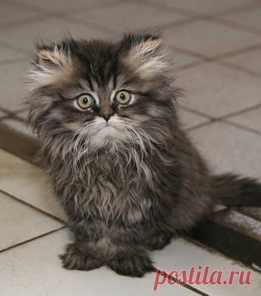 Прикольные фото кошек: Удивлённый серый котёнок.