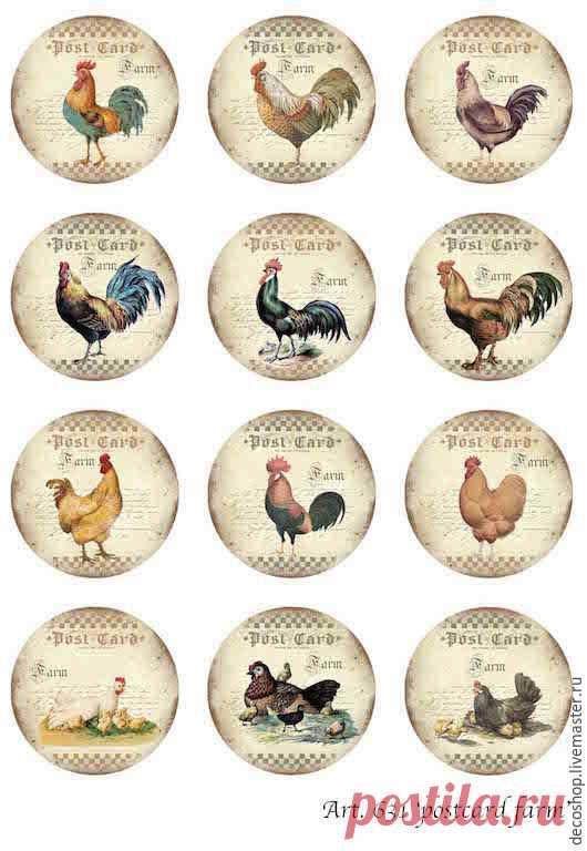 Fotos de gallos y pollos de la tienda Flowers of Paris. Discusión en LiveInternet - Servicio de Diarios en línea de Rusia