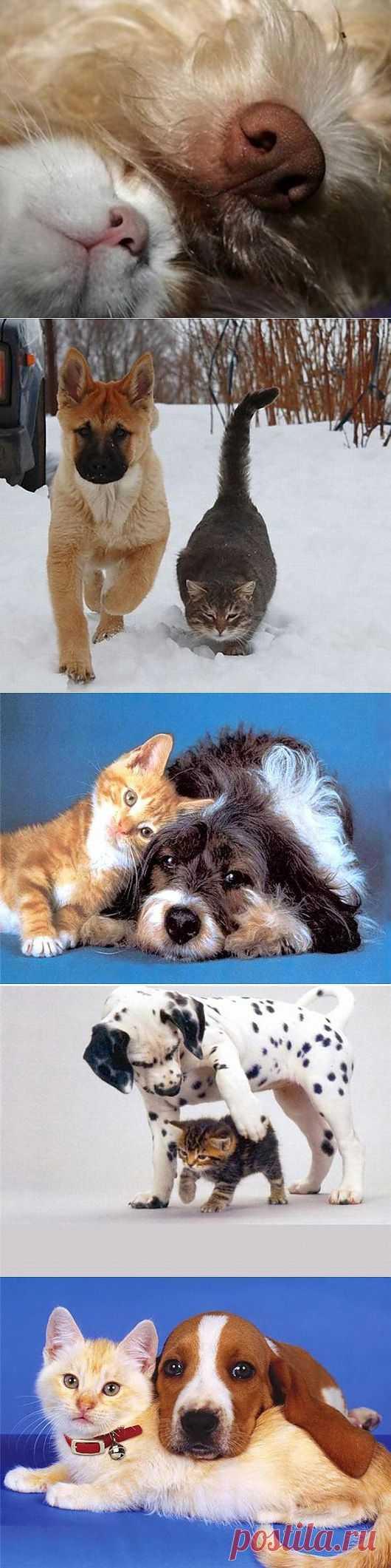 Как кошка с собакой…   SOFTMIXER