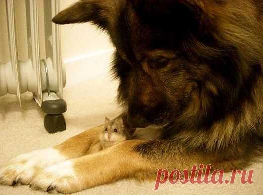 ты под моей защитой.....