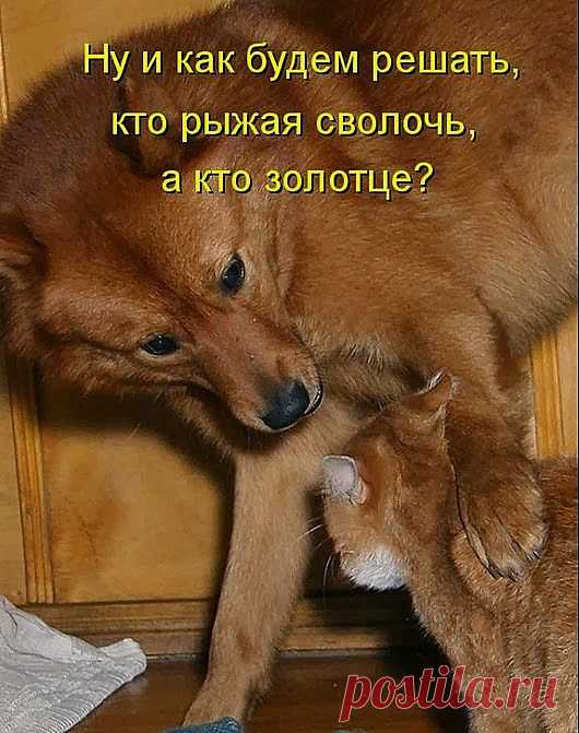 Собачьи радости или собакоматрица - 1 | 5минутка