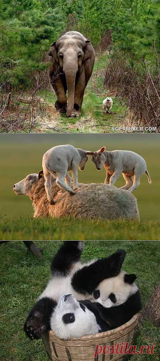 Животные - друзья   SOFTMIXER