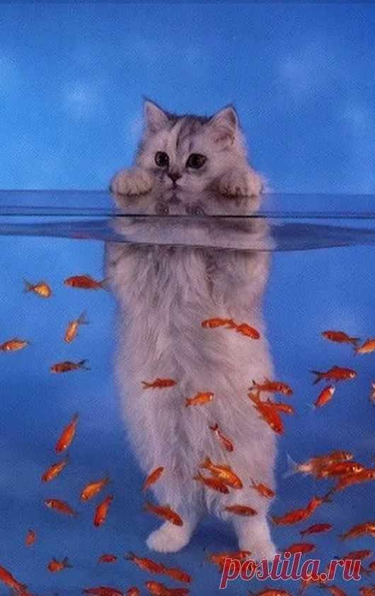 Картинки анимация кошек на телефон