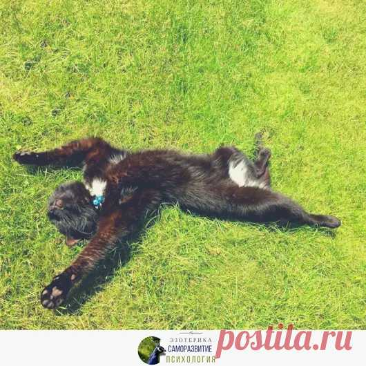 Try cat's technology of relaxation ~ * ~ * ~ * ~ * ~ * \ud83c\udf1f ~ * ~ * ~ * ~ *...
