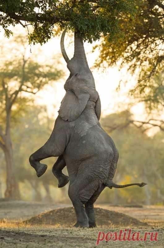 Мотивированный слон. А вы так же настойчивы в достижении своей цели?