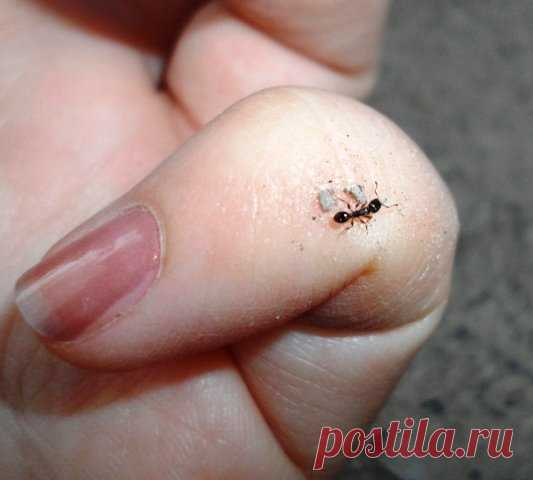 How to get rid of ants on a site | Klumba-plus.ru | Yandex the Zen