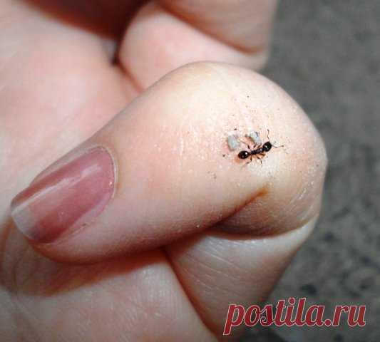 Как избавиться от муравьев на участке   Klumba-plus.ru   Яндекс Дзен