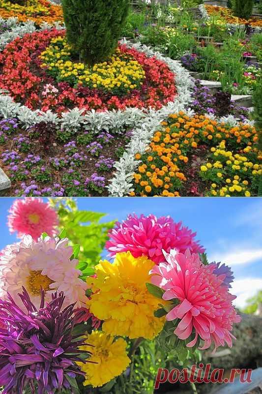 Живой и красивый цветник осенью - не проблема