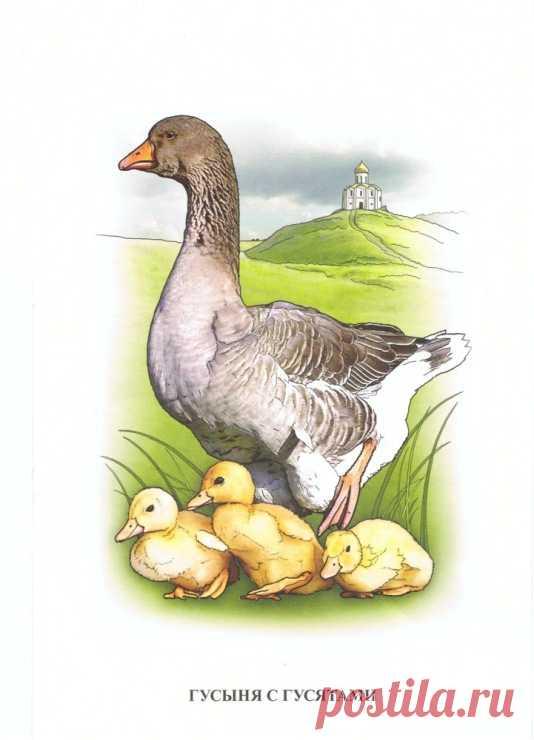 Картинки детеныши домашних птиц