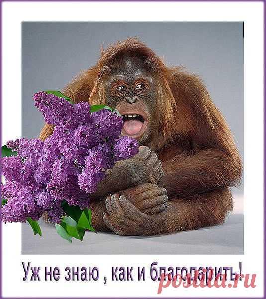 Приколы с обезьянами открытки