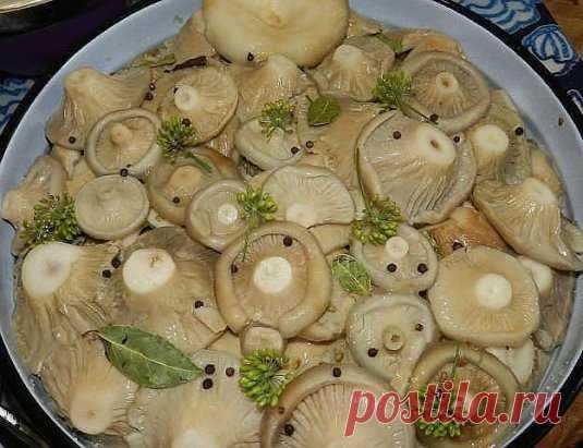 8 ВКУСНЫХ РЕЦЕПТОВ ЗАСОЛКИ ГРУЗДЕЙ!  1. Грузди, соленые на зиму. простой рецепт без добавления специй.  Для того чтобы приготовить грузди по этому старому и простому рецепту, нужно взять:  Соль крупная - 250 грамм;  Грузди - 5 килограмм вымоченных грибов;  Собранные вами грузди нужно сначала хорошо почистить, убрать все места, которые вам  кажутся подозрительными.  Червивые участки нужно срезать, а также не оставлять те места, в которые есть проколы от хвои.  После нужно отрезать у каждого г