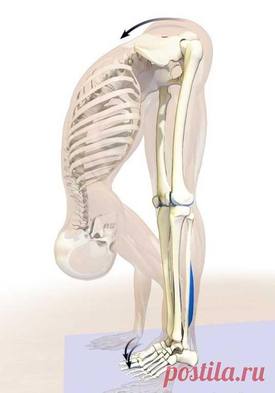ХОЧЕШЬ ЖИТЬ ДОЛЬШЕ? ЧАЩЕ НАКЛОНЯЙСЯ! Поясничная мышца (the psoas muscle) — это самая глубокая мышца человеческого тела, влияющая на наш структурный баланс, мышечную интеграцию, гибкость, силу, диапазон движений, подвижность суставов и функционирование органов. «Мышца души» находится в теле вовсе не в груди, как можно предположить, а в области таза. Стрессы современной жизни закрепощают ее, порождая проблемы со здоровьем. Влияние образа жизни на здоровье В даосской традиции...