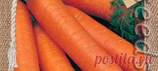 Морковь Шармэль, 2 г Среднеспелый сорт (от всходов до технической спелости 80-110 дней). Корнеплод цилиндрической формы, тупоконечный, длиной 14-15 см, массой 100-130 г. М...