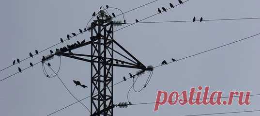 Компания Endesa обвиняется в смерти сотен птиц, пораженных током на линиях электропередачи. В иске утверждается, что из-за халатности энергогигант создал «смертельную ловушку» для пернатых, в числе которых оказались и охраняемые виды.
