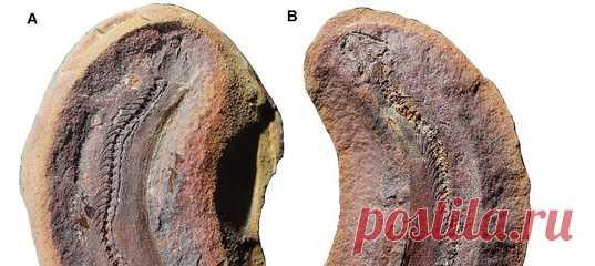 В США обнаружили окаменелость размером с палец возрастом 308 миллионов лет, которая даёт представление о привычках крошечных динозавроподобных существ – возможных предшественников рептилий.